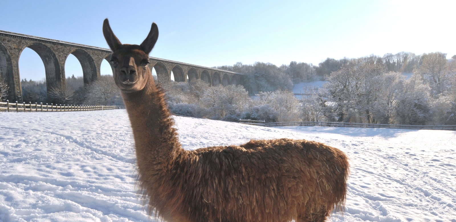 Pedro Llama in snow